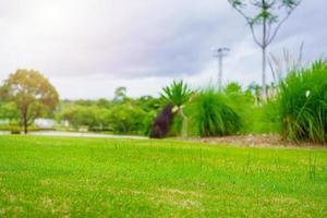 erba verde della natura nel giardino del campo da golf foto