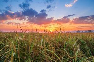 campo di riso con cielo al tramonto foto