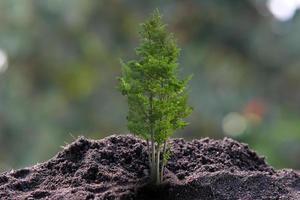 piccolo albero che cresce su sfondo verde foto