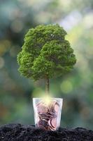 albero che cresce da un albero, concetto di crescita del business foto