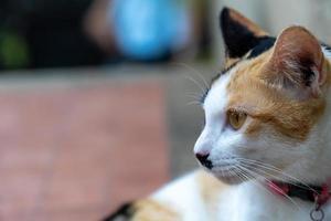 Close up ritratto gatto arancione foto