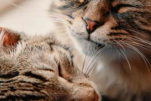 due simpatici gatti sorridenti foto