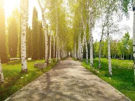 parco con alberi su un sentiero foto