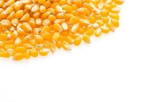 semi di pannocchia di mais foto