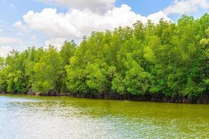 bellissimo paesaggio della foresta di mangrovie in thailandia foto