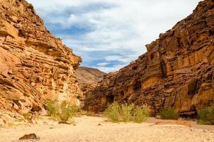canyon colorato con piante verdi foto