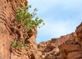 pianta che cresce da una parete rocciosa foto