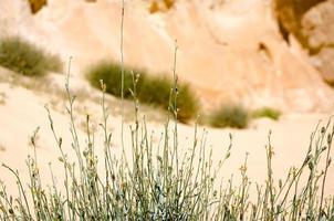 erba in un deserto foto