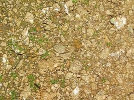 patch di terreno per lo sfondo o la trama foto