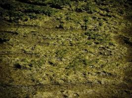 alghe per sfondo o texture foto