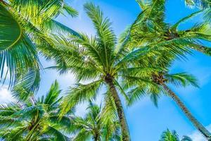 palma da cocco sul cielo blu foto