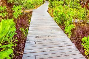 sentiero in legno per passeggiate a piedi foto