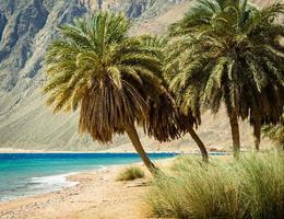 spiaggia tropicale del Mar Rosso foto