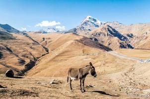 asino in montagna foto
