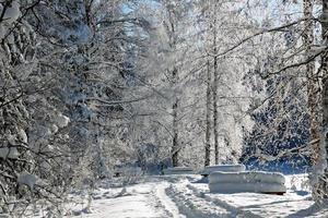 alberi congelati e panchine in cumulo di neve in una giornata di sole foto