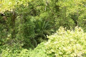 fitta foresta tropicale in Grecia foto