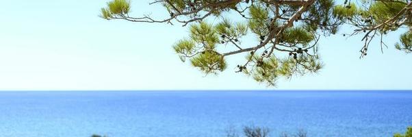 vista sul mare attraverso il ramo di pini e cespugli verdi foto