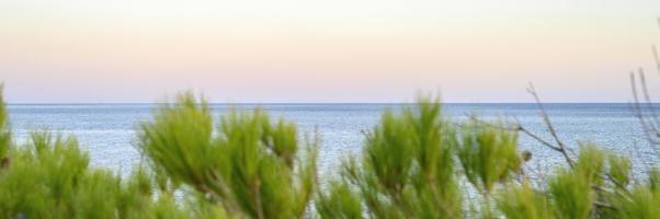 orizzonte del paesaggio marino al tramonto e sfocate rami di un albero di pino foto