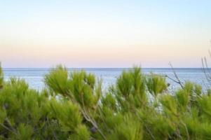 orizzonte del paesaggio marino al tramonto e un sfocato rami di un albero di pino foto