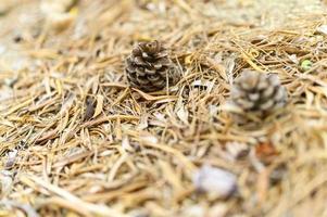 mucchio di foglie secche secche cadute autunnali di ulivi e pigne foto