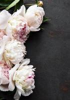 fiori di peonia su uno sfondo di cemento nero foto