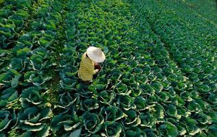 il contadino sta fertilizzando in un cappello di paglia foto
