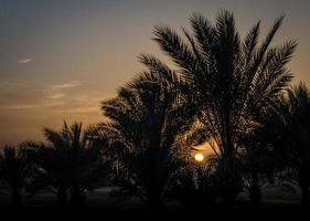 sole che tramonta dietro le palme foto