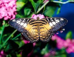farfalla gialla nera brillante foto