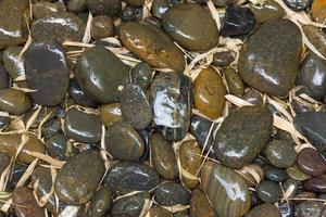 pietre di fiume bagnate e foglie di bambù foto
