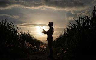 silhouette di contadino in piedi nel raccolto di canna da zucchero foto