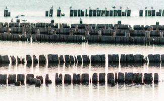 gabbiani su ceppi di legno in acqua foto