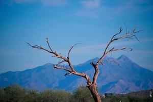 un ramo di un albero davanti a una catena montuosa foto