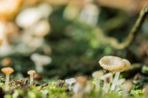 macro close up di funghi marroni allo stato selvatico foto