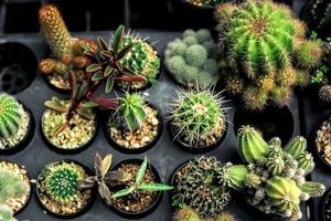 tipi di varietà di cactus nella fattoria con messa a fuoco selettiva e sfondo sfocato foto