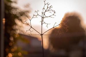 immagine astratta del primo piano del piccolo albero essiccato e rami con luci bokeh e tramonto sullo sfondo