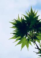 foglie di albero verde nella stagione primaverile foto