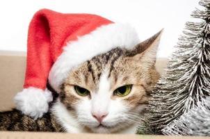 gatto pazzo in un cappello da Babbo Natale foto