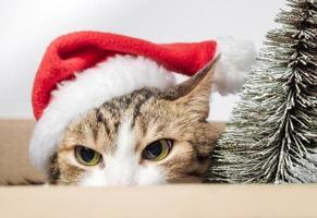 gatto arrabbiato con un cappello da Babbo Natale foto