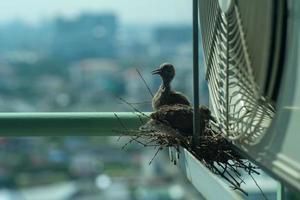 Primo piano gli uccelli in un nido sulla gabbia in acciaio del condizionatore d'aria sulla terrazza di alto condominio con sfocata sullo sfondo del paesaggio urbano nel sole mattutino