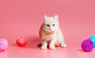 gatto arancione con filato foto