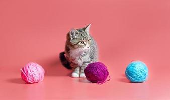 gatto con filato foto
