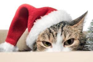 gatto arrabbiato in un cappello da Babbo Natale foto