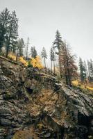 montagna rocciosa con alberi