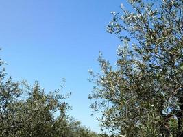 alberi contro un cielo blu chiaro foto