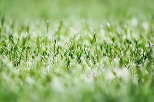 erba verde fresca foto