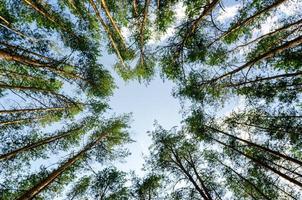 cerchio di alberi foto