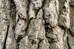 vecchio primo piano del tronco di albero foto