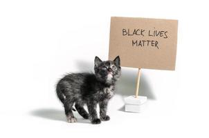 gattino calico scuro con segno di materia di vita nera foto