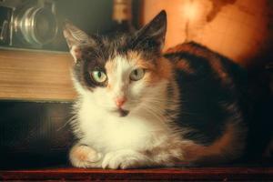 gatto posa su un primo piano scrivania foto