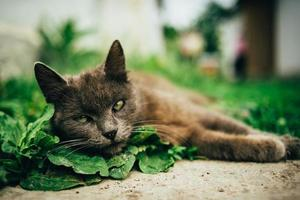 gatto grigio sulle foglie